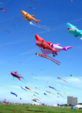 A Sky Full Of Kites by braces, Photography->Skies gallery
