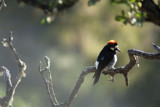 Woodpecker by temorris, photography->birds gallery