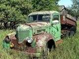 Dodge on the Farm by cuddlebuddy48, Photography->Transportation gallery