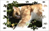Daydreams in the Daisies by LynEve, photography->pets gallery