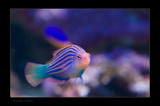 Neon Fish by kodo34, Photography->Underwater gallery