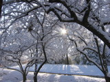 sun peeking through snowy tree by gagabhh, Photography->Landscape gallery