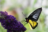 Butterfly Exhibit #5 by tigger3, photography->butterflies gallery