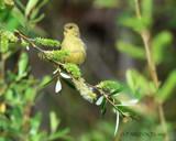 Tis the Season by garrettparkinson, photography->birds gallery