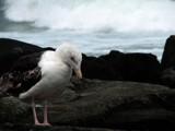 Sadness by capturer, photography->birds gallery