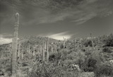 Black and White Cacti by KT11109, Photography->Landscape gallery