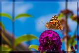 Observing A 'Fairy Tale World' by corngrowth, photography->butterflies gallery