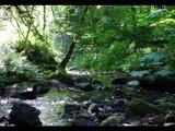 Interurban Trail by Zaeyal, Photography->Landscape gallery