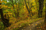 Autumn...Take 8 by rriesop, Photography->Landscape gallery