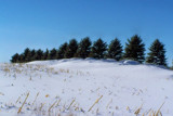 Snowy Tree Line by kidder, Photography->Landscape gallery