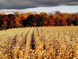 Colors of the Farm! by marilynjane, Photography->Landscape gallery