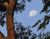 Morning Moon by CDHale, photography->skies gallery