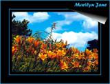 South Dakota Winds!   2 by marilynjane, Photography->Landscape gallery