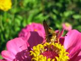 Mid-morning Snack II by Hottrockin, photography->butterflies gallery