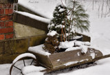 Winter At The Garden #2 by tigger3, photography->gardens gallery