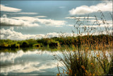 McKenzie Country Reflections by LynEve, photography->landscape gallery