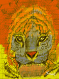Tiger Sketch by bfrank, illustrations gallery