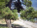 My Favorite Tree by koca, photography->shorelines gallery
