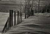 Dune Shadows by zunazet, photography->shorelines gallery