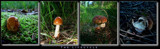 Lifecycle by Larser, Photography->Mushrooms gallery