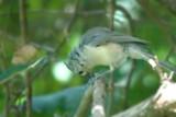 toe jam 2 by photog024, Photography->Birds gallery