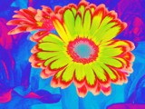Flower Power by trixxie17, photography->manipulation gallery