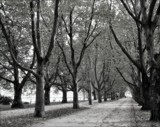 short-distance running by Marzena, contests->b/w challenge gallery
