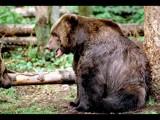A Kodiak Moment by photoimagery, Photography->Animals gallery