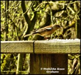 Bird by Dunstickin, photography->birds gallery
