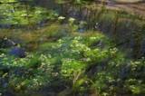 A Little Beauty by Stevenn120, Photography->Water gallery