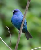 Bird Blind Blues by rahto, photography->birds gallery