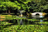 Green scene by LynEve, photography->gardens gallery