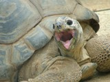 Giant Tortoise by heuers, Photography->Reptiles/amphibians gallery