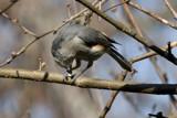 Super Toe Jam by photog024, Photography->Birds gallery