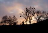 Mistletoe at Sunset by gbo911, Photography->Landscape gallery