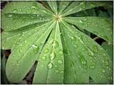 Some kinda plant by brandondockery, Photography->Macro gallery