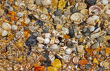 Sea Shells by the Sea Shore by SatCom, Photography->Nature gallery