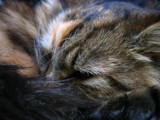 Feline Sleep by Mannie3, Photography->Pets gallery