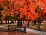 Quietly Orange by jojomercury, Photography->Manipulation gallery