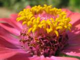 Inner Workings by Hottrockin, Photography->Flowers gallery