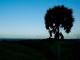 Palm Shilouette by d_spin_9, Photography->Landscape gallery
