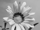Simplicity by Paul_Gerritsen, Photography->Flowers gallery