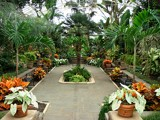 Tropical Greenhouse by ohpampered1, Photography->Gardens gallery