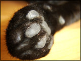 Inky Paw by Galatea, Photography->Animals gallery