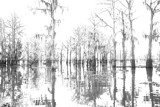Winter in the Swamps by bryancito, Photography->Landscape gallery