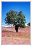 cds18 by ferit, Photography->Landscape gallery