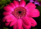 Friday Flower by LynEve, photography->flowers gallery