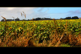 The Sunflower Field by LynEve, photography->landscape gallery
