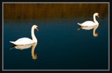 Synchronized by corngrowth, photography->birds gallery