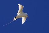 Koa'e 'ula 2 by jeenie11, photography->birds gallery